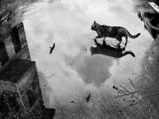 گربه زیر باران. ارنست همینگوی. مترجم: احمد گلشیری