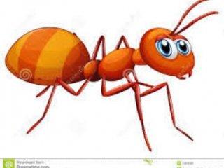 داستان مورچه. نویسنده: دکتر منجمی