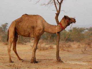حکایت مرد شترسوار و مار؛ بازنوشت حکایتی از جوامع الحکایات. نویسنده: محمدرضا بیگی