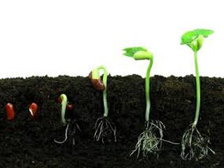 جترو تول: بذرهایی درون خاک